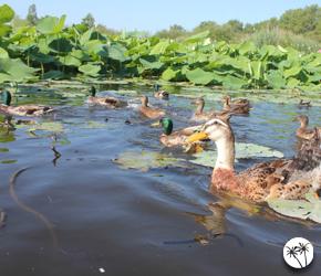 L'étang de Fontmerle à Mougins