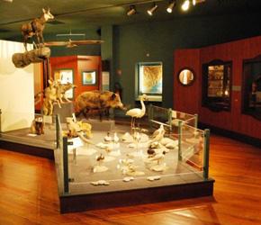Muséum d'Histoire naturelle de Nice (MHNN)