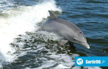 Nager avec les dauphins en Mer Méditerranée - France