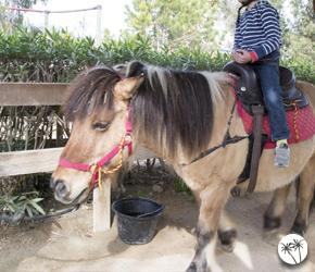 Tour de poney - Kid's island - Antibes