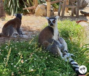 Lémuriens - Kid's island - Antibes