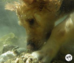 baignade autorisée pour les chiens dans les Alpes Maritimes